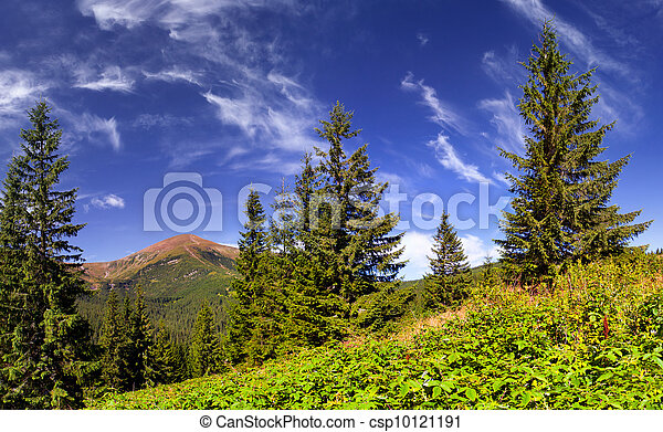 Beautiful summer landscape in the mountains - csp10121191