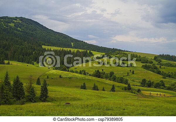 Beautiful summer landscape - csp79389805