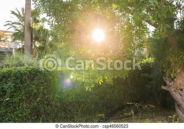 Beautiful summer landscape with trees and green grass - csp46560523