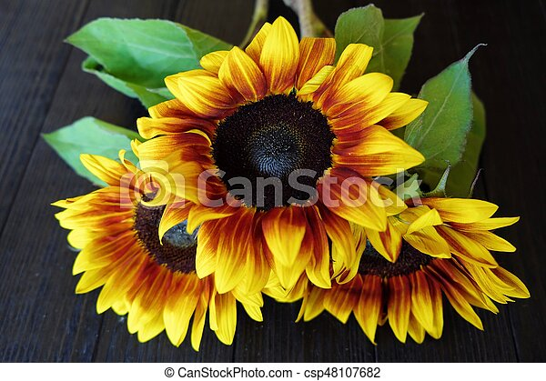Beautiful summer sunflowers on brown background - csp48107682
