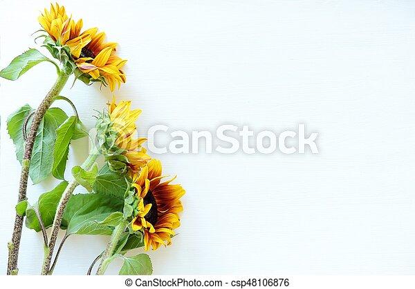 Beautiful summer sunflowers on white background view - csp48106876