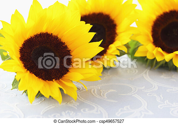 Beautiful sunflowers on fabric background - csp49657527