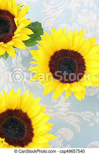 Beautiful sunflowers on fabric background, top view. - csp49657540