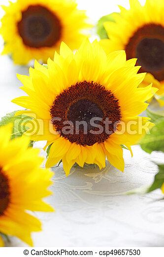 Beautiful sunflowers on fabric background - csp49657530