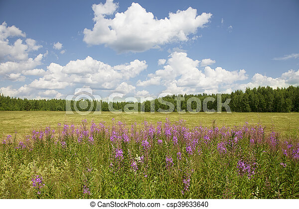 Beautiful sunny day in the field - csp39633640