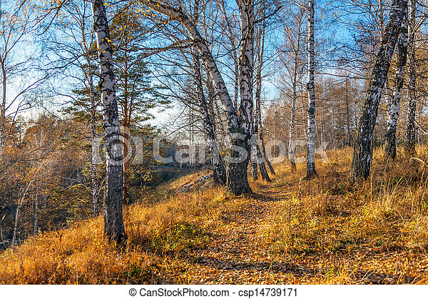 Beautiful sunset in autumn forest. - csp14739171