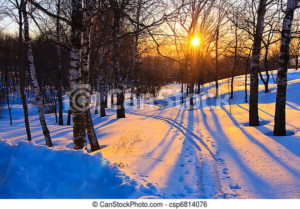 Beautiful sunset in winter forest - csp6814076