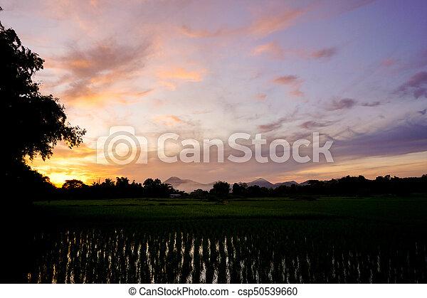 beautiful sunset - csp50539660