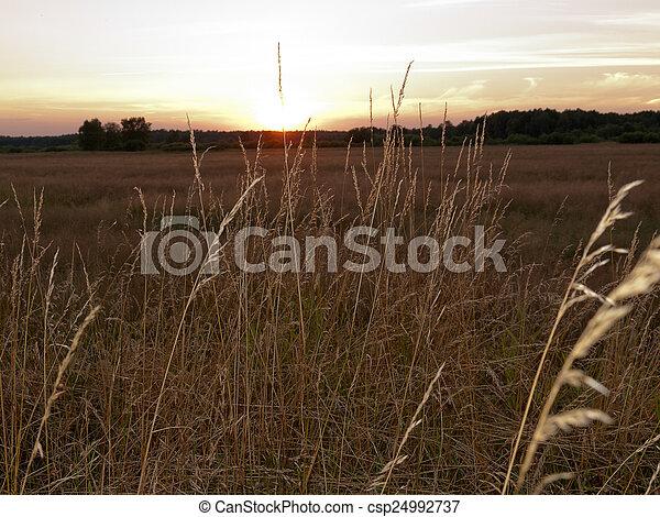 Beautiful sunset - csp24992737