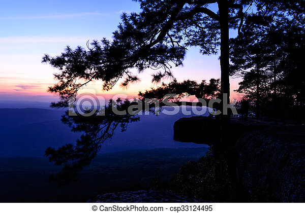 Beautiful sunset with pine tree on mountain cliff, Lom Sak cliff at Phu Kra Dueng National Park in Thailand. - csp33124495