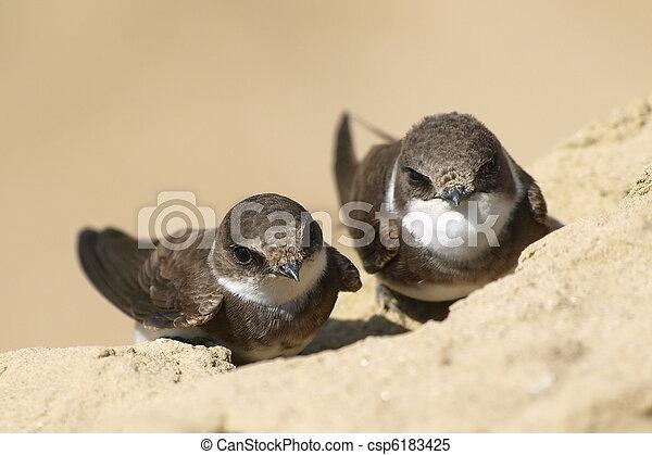 Beautiful swallow Sand Martin - csp6183425