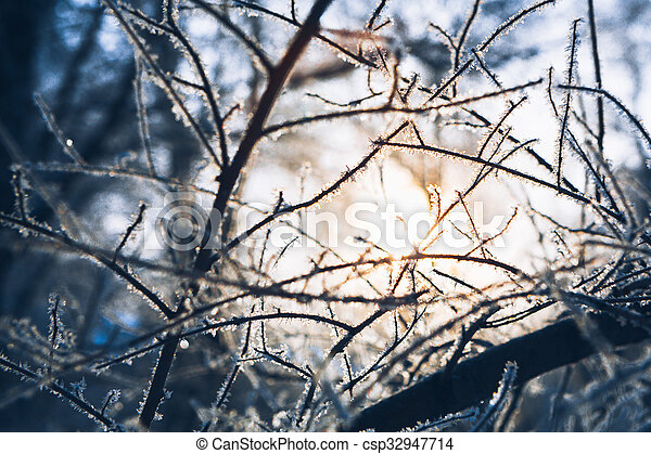 Beautiful tree branches in hoarfrost the winter on a blurred background sun - csp32947714