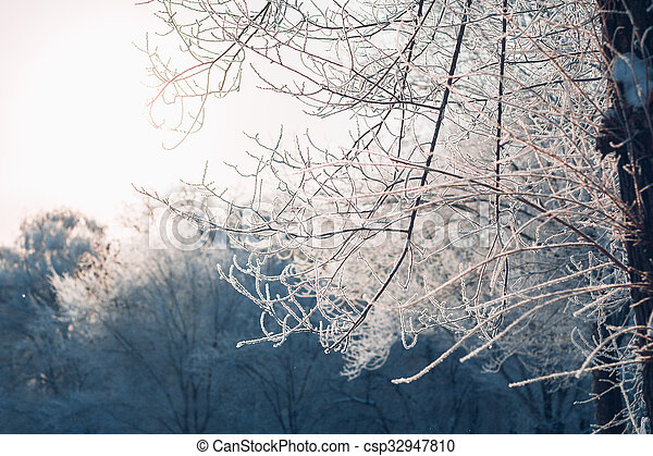 Beautiful tree branches in hoarfrost the winter on a blurred background sun - csp32947810