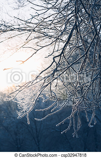 Beautiful tree branches in hoarfrost the winter on a blurred background sun - csp32947818