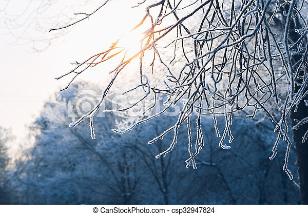 Beautiful tree branches in hoarfrost the winter on a blurred background sun - csp32947824