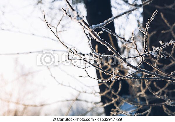 Beautiful tree branches in the frost on background of winter forest - csp32947729