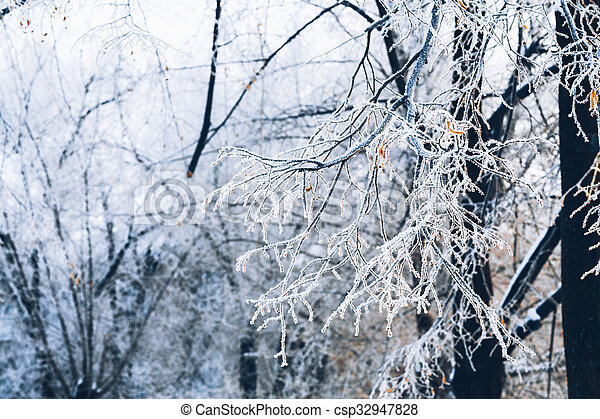 Beautiful tree branches in the frost on background of winter forest - csp32947828
