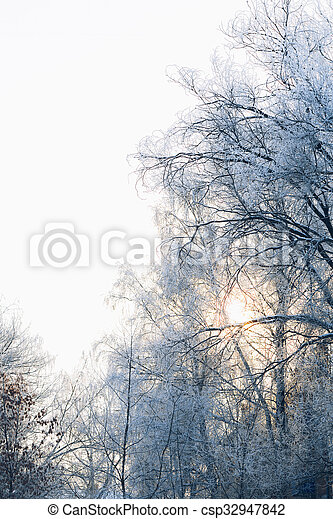 Beautiful tree branches in the frost on background of winter forest - csp32947842