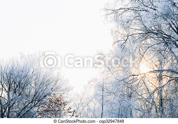 Beautiful tree branches in the frost on background of winter forest - csp32947848