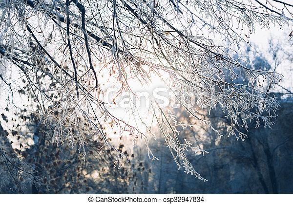 Beautiful tree branches in the frost on background of winter forest - csp32947834