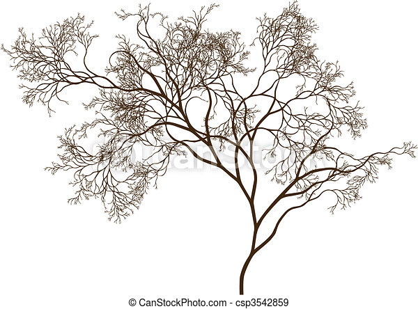 beautiful tree - csp3542859