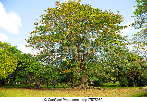 beautiful tree in the park of Mauritius - csp17575963