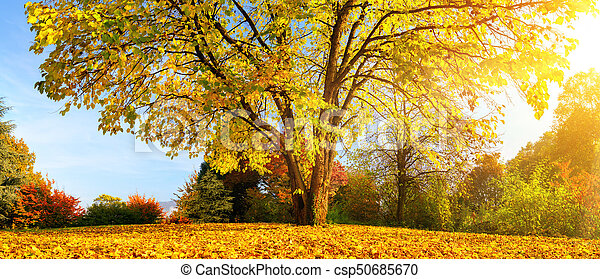 Beautiful tree on a sunny autumn day - csp50685670