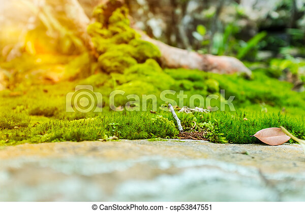 Beautiful Tree With Moss Cover Nature Green Wood Sunshine