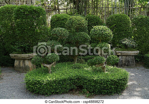 Beautiful trees in park - csp48898272