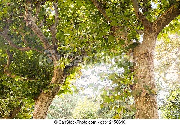 Beautiful trees in sunlight - csp12458640