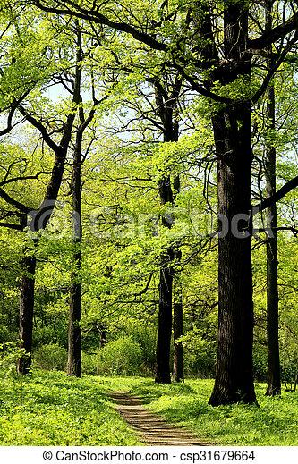 beautiful trees photographed - csp31679664