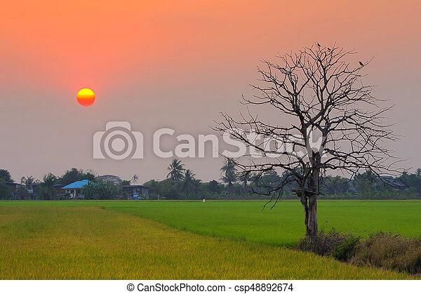 Beautiful trees - csp48892674