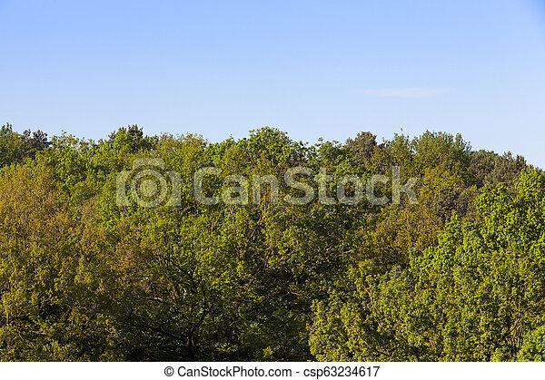 beautiful trees - csp63234617