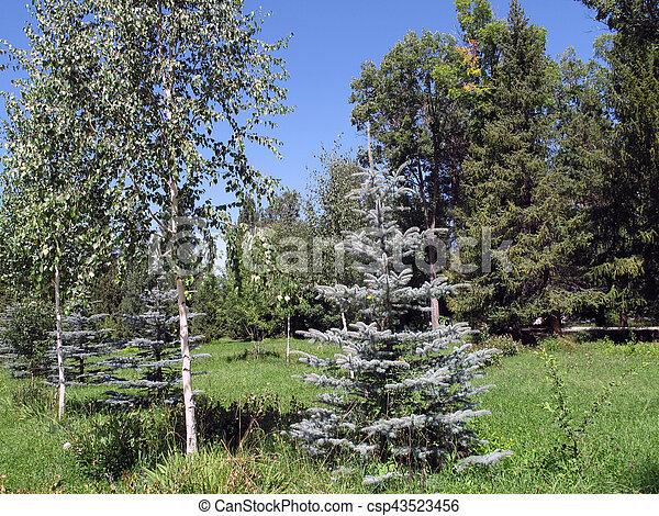 beautiful trees - csp43523456