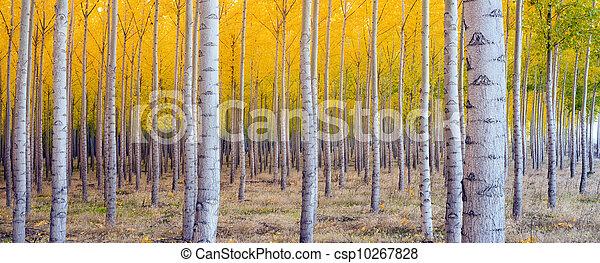 Beautiful Trees - csp10267828