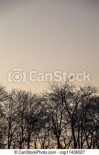 beautiful trees - csp11436027
