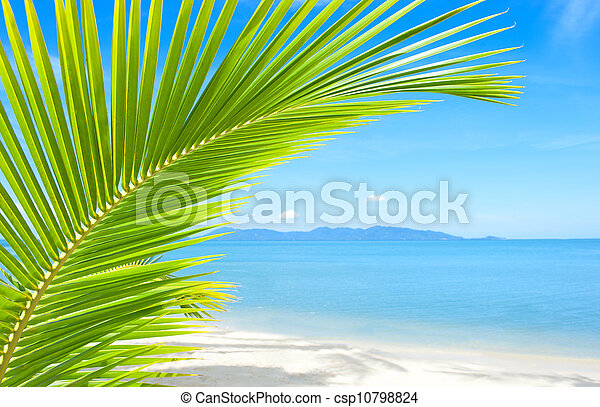 Beautiful tropical beach with palm tree and sand - csp10798824