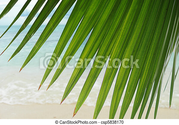 Beautiful Tropical Scene Great Wallpaper And Background