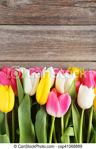 Beautiful tulips on grey wooden background - csp41068889