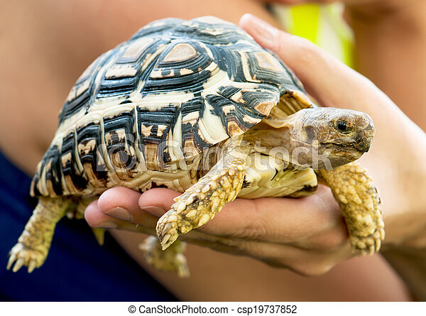 Beautiful turtle in a woman's hand - csp19737852