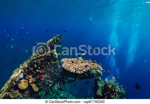 Beautiful underwater world with corals and tropical fish at USS Liberty Wreck - csp61740340