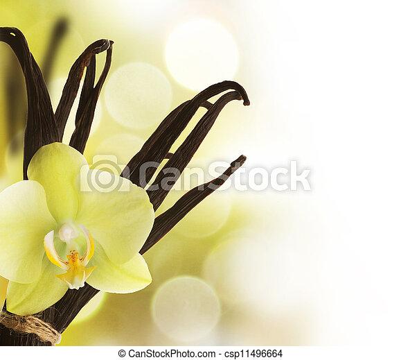 Beautiful Vanilla Border - csp11496664