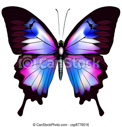 Beautiful vector isolated blue butterfly - csp8776016