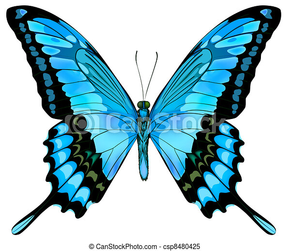 Beautiful vector isolated blue butterfly - csp8480425