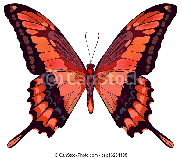 Beautiful vector isolated red butterfly - csp16284138