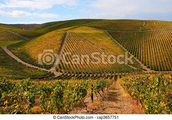 Beautiful Vineyard Landscape - csp3657751