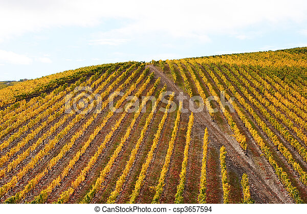 Beautiful Vineyard Landscape - csp3657594