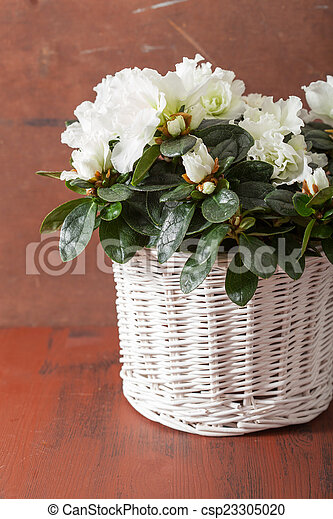 Beautiful white azalea flowers in basket over rustic stock photo beautiful white azalea flowers in basket over rustic background csp23305020 mightylinksfo Images