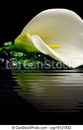 Beautiful white Calla lily reflected in water - csp19121832