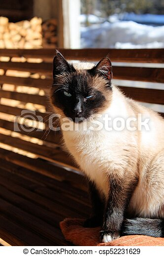 Beautiful white cat with blue eyes - csp52231629